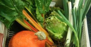 Distribution de légumes